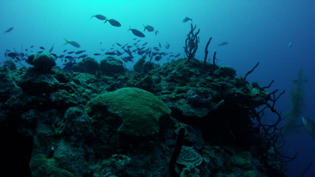 4k red underwater moving shot of reef fish swimming amonst sea fans at the edge of reef drop-off - ゴーゴニアンコーラル点の映像素材/bロール