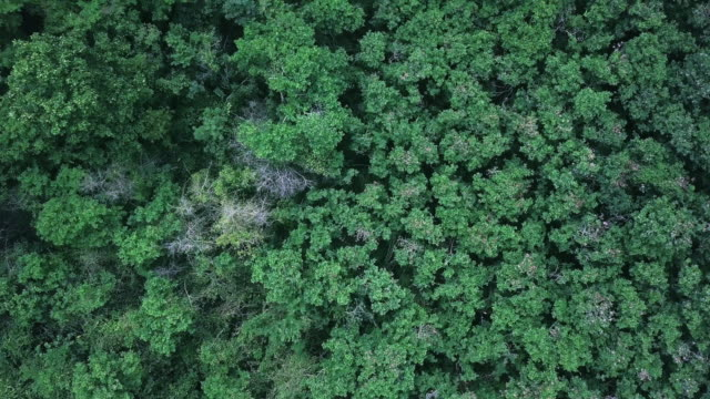 4k resolution aerial view of forest and agricultural field - plantation stock videos & royalty-free footage