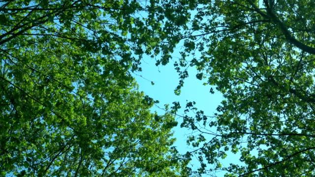 4k weg met bomen