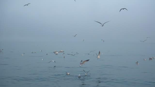 霧の海の上の4kカモメ - イスタンブール 金角湾点の映像素材/bロール