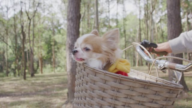 4k slo mo, chihuahua dog in basket of bicycle - basket stock videos & royalty-free footage
