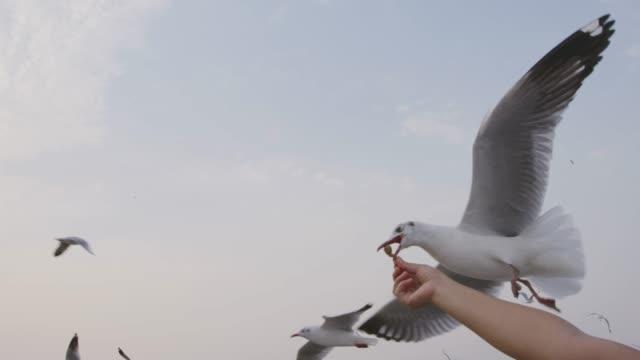 4k slo mo , Feeding seagulls by hand