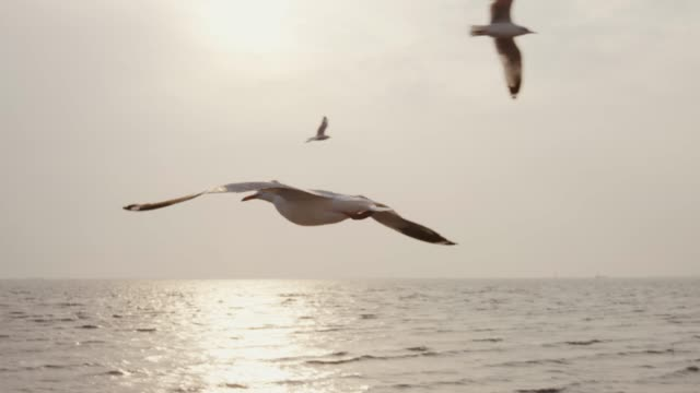 vídeos de stock, filmes e b-roll de mo de slo 4 k, gaivotas voando - atividade móvel