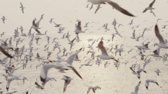 4k slo mo , large group of seabird flying at coastline - battere le ali video stock e b–roll