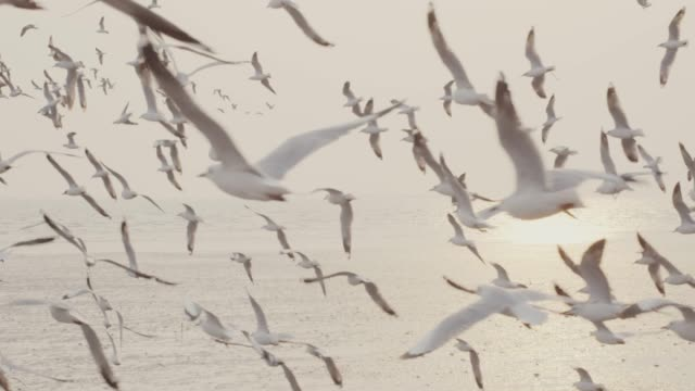 4k slo mo , large group of seagulls flying over the sea - seagull stock videos & royalty-free footage