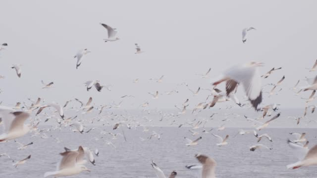 4k slo mo , large group of seagulls flying over the sea - seagull stock videos and b-roll footage