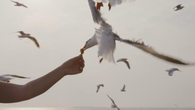 vidéos et rushes de 4 mo de slo k, seagull, ramasser les aliments de la main - partie du corps d'un animal