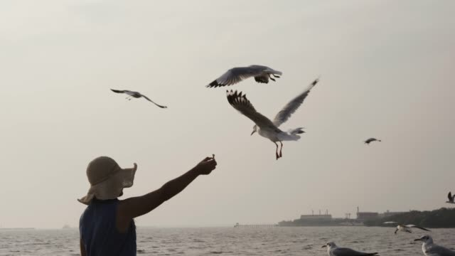 vídeos de stock, filmes e b-roll de mo de slo 4 k, mulheres alimentando gaivotas - gaivota