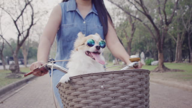 4k slo mo ,women riding bicycle with little dog in basket - sunglasses stock videos & royalty-free footage
