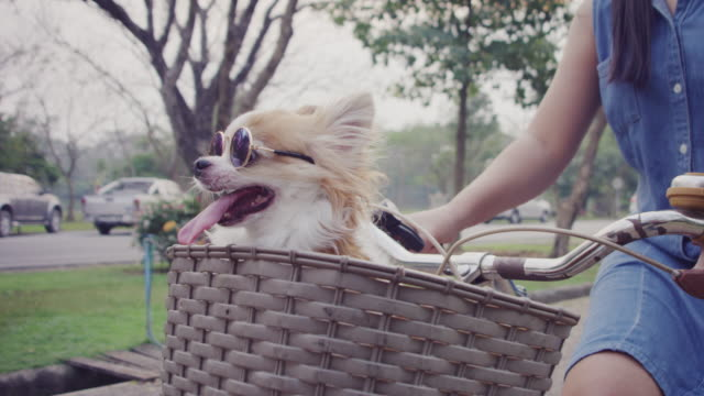 4k slo mo ,women riding bicycle with little dog in basket - pets stock videos & royalty-free footage