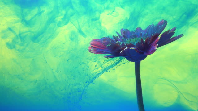 4k slow motion blue ink and daisy flower in water. - super slow motion stock videos & royalty-free footage