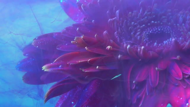 4k slow motion blue ink and daisy flower in water. - acrylic painting stock videos & royalty-free footage