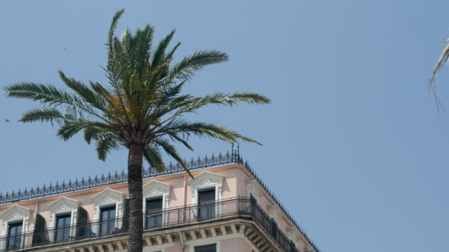 4k slow motion clip of palm tree blowing in the wind with beautiful french architecture in the background in nice, france. - cote d'azur stock videos & royalty-free footage