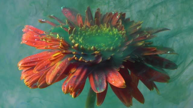 4 k スローモーション グリーン インクとデイジーは、水の花します。 - green colour点の映像素材/bロール