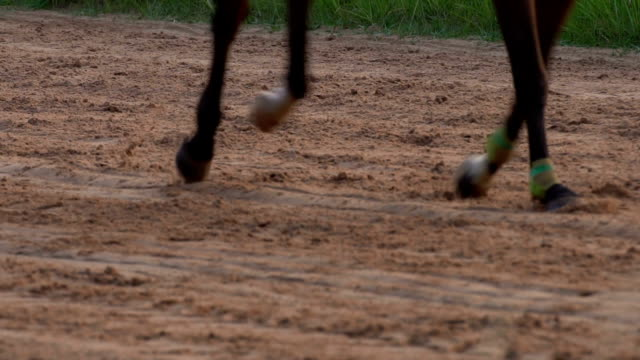 4k slow motion horse racing the lose one - cinque animali video stock e b–roll