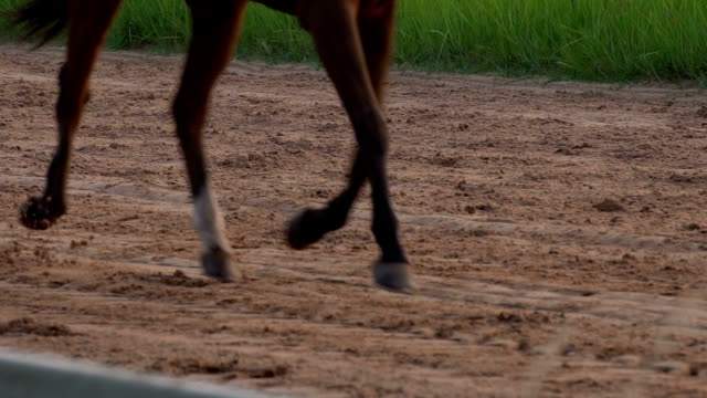 4k slow motion horse run - racehorse stock videos and b-roll footage