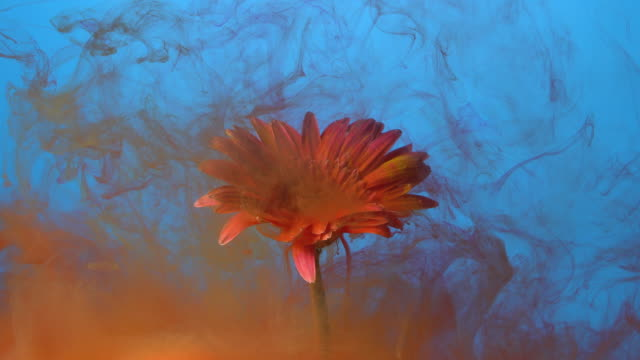4k slow motion red ink and daisy flower in water. - super slow motion stock videos & royalty-free footage
