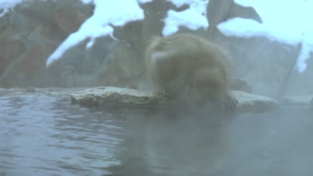 4k : snow monkey in hot spring - nagano prefecture stock videos and b-roll footage