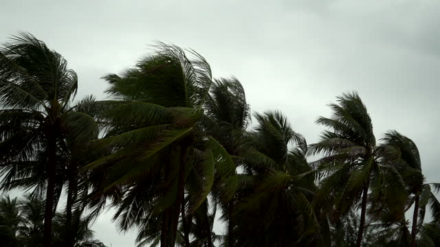 4k : storm blowing coconut palm trees - island stock videos & royalty-free footage