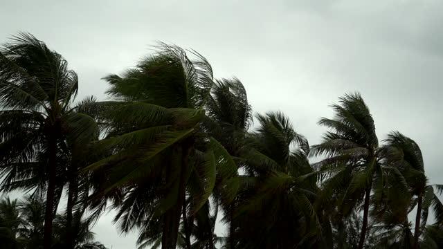 vídeos y material grabado en eventos de stock de 4k : tormenta soplando palmeras de coco - huracán