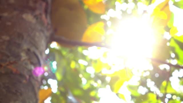 4k, sun light through tree, nature scene