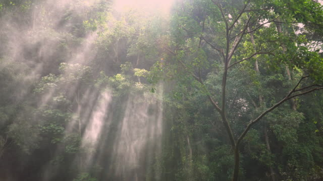 4k, sunlight through trees with spray from waterfall. - sunbeam stock videos and b-roll footage