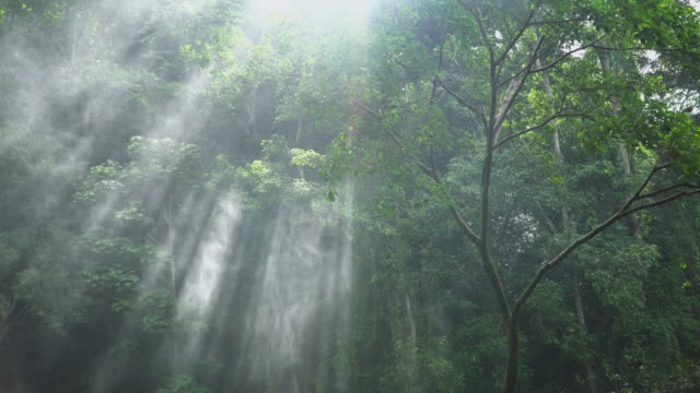 4k, Sunlight through trees with spray from waterfall.