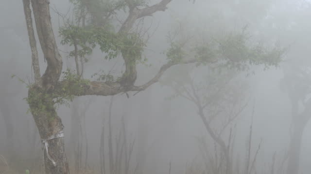 stockvideo's en b-roll-footage met 4k the mist in morning at tropical forest - digitaal samengesteld beeld