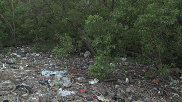 4k tilt down shot of garbage at mangrove forest and sea coast. - mangrove tree stock videos & royalty-free footage
