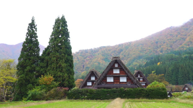vídeos de stock e filmes b-roll de 4k tilt down: three gassho house at shirakawago village in autumn season, gifu, japan. - telhado de palha