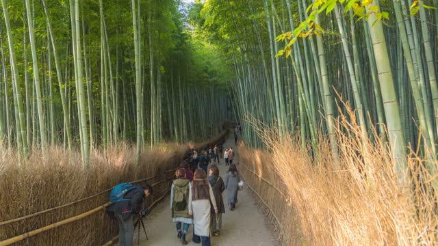 4k time - lapse crowd of people at arashiyama bamboo forest. - satoyama scenery stock videos & royalty-free footage