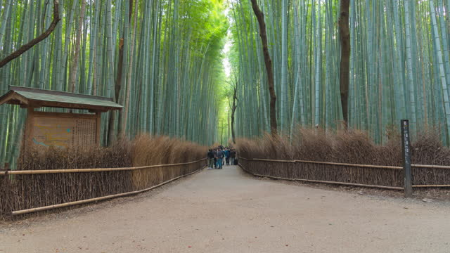 4k time - lapse crowd of people at arashiyama bamboo forest. - bamboo plant stock videos & royalty-free footage