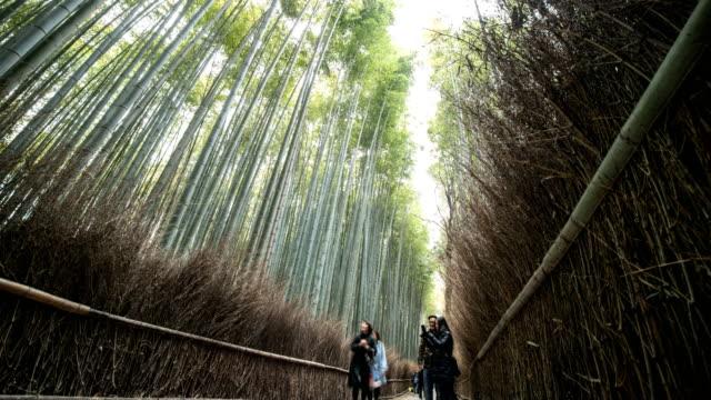 4k time lapse : people walking at the bamboo forest at arashiyama in kyoto, japan, tilt up shot - tilt up stock videos & royalty-free footage