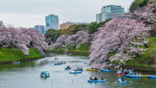 4k time lapse : tourist celebrating cherry blossom at park in tokyo - satoyama scenery stock videos & royalty-free footage