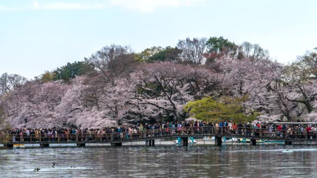 4kタイムラプス:東京の公園で桜を祝う観光客 - 運河点の映像素材/bロール