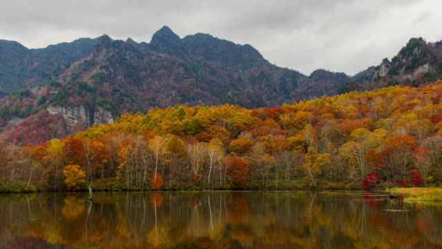 4k time lapse wide shot of kagamiike pond in autumn season, nagano, japan. - japanese maple stock videos & royalty-free footage