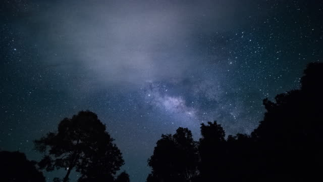 4k timelapse of milky way with tree silhouette in night sky. - tree stock videos & royalty-free footage