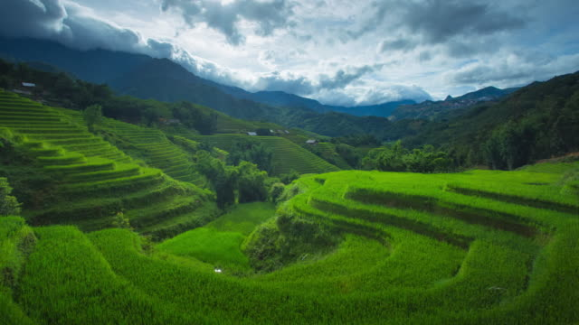 4k time-lapse of step rice paddy and cloudy in sapa vietnam. - sa pa stock videos and b-roll footage
