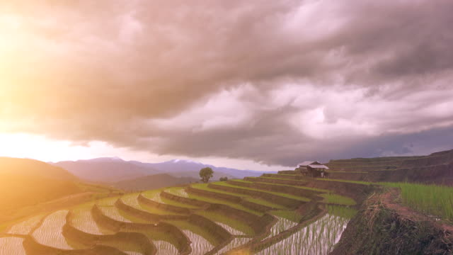 4k Time-lapse of step rice paddy and cloudy in Thailand
