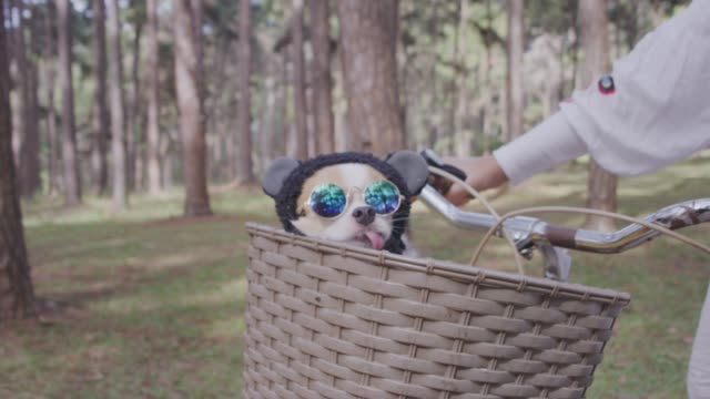 4k tracking cute little dog with sunglasses on bicycle basket - copricapo abbigliamento video stock e b–roll