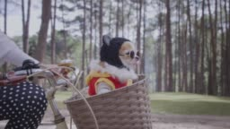 4k Tracking with happy Chihuahua dog in basket of bicycle