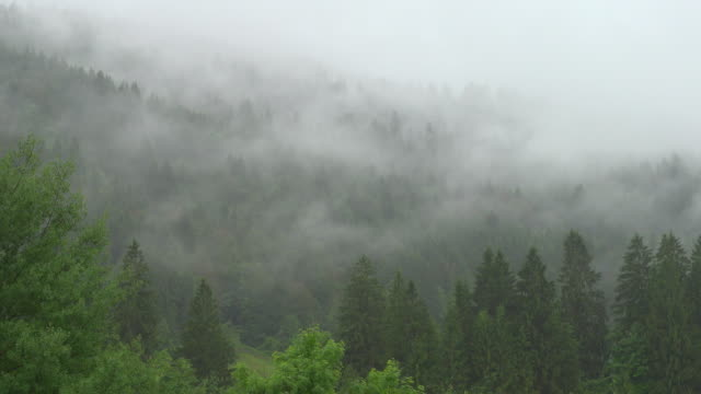 4k : tree fog over mountains - pine tree stock videos & royalty-free footage