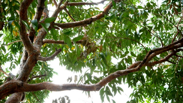 4 k の木の庭で - 枝点の映像素材/bロール