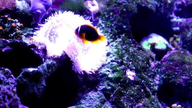 4k tropical fish - tropical fish stock videos & royalty-free footage