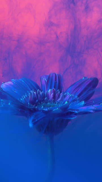 vídeos de stock e filmes b-roll de 4k vertical blue ink and daisy flower in water. - design