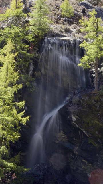 4k vertical; long exposure waterfall in autumn season. - pinaceae stock videos & royalty-free footage