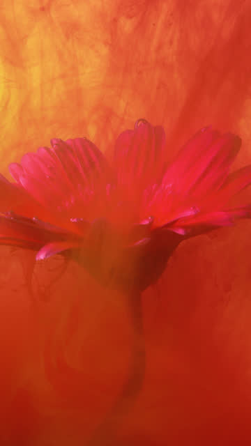 4k vertical red ink and daisy flower in water. - petal stock videos & royalty-free footage