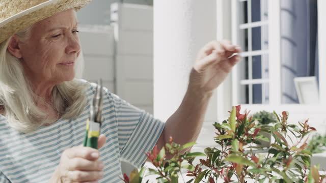 vidéos et rushes de footag vidéo de 4k d'une femme aînée travaillant dehors dans son jardin - jour
