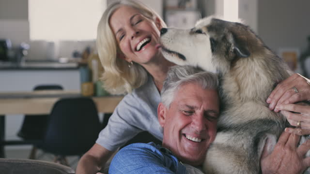 vídeos de stock e filmes b-roll de 4k video footage of a mature couple bonding in their living room together with their dog - homens adultos