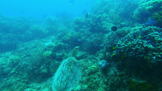 4k video footage of a sea turtle amongst the coral reef - science and technology stock videos & royalty-free footage